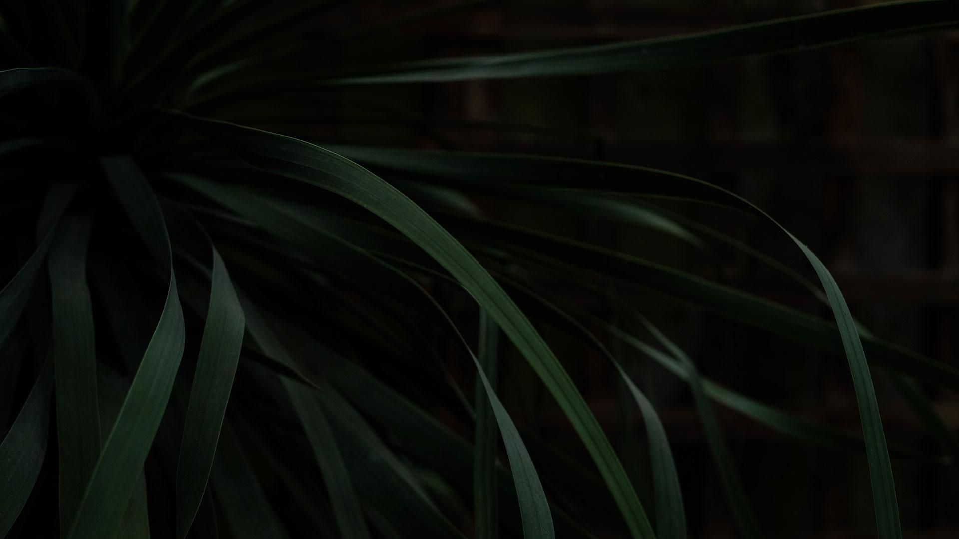 vibui-image-startscreen-bg